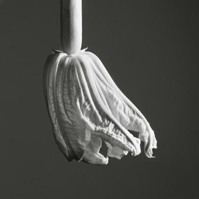 programmation art contemporain photographie du domaine de chaumont sur loire domaine de. Black Bedroom Furniture Sets. Home Design Ideas