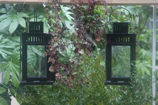 Des arbres en hiver et jardins d 39 hiver domaine de - Jardins dhiver com ...